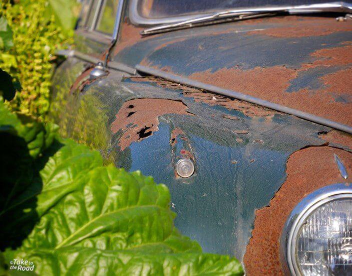Jaguar Mk2 3.8 abandoned classic cars